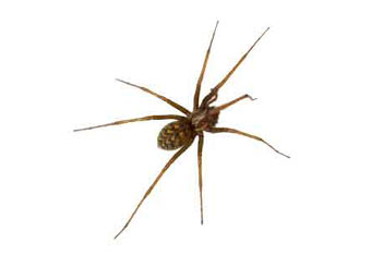 Preventing spiders by Tough Bug Solutions in Portland OR Beaverton and Tigard Oregon