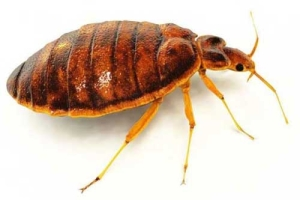 Home Bed Bug Control offered by Tough Bug Solutions serving Vancouver WA